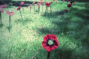 Strickblümchen im Park