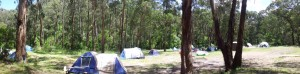 Campside in the forest
