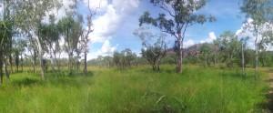Vegetation in Kakadu Nationalpark
