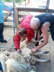 shearing lesson