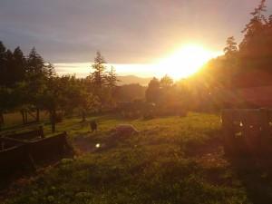 Sonnenuntergang auf der Campbell Farm