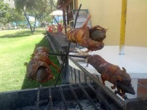 Cuy = Meerschweinchen