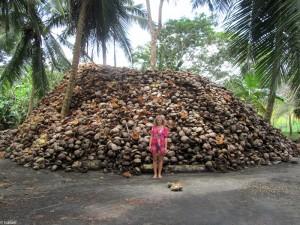 un monton de cocos