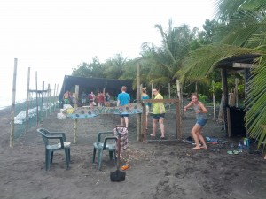 pacuare volunteers in hatchery