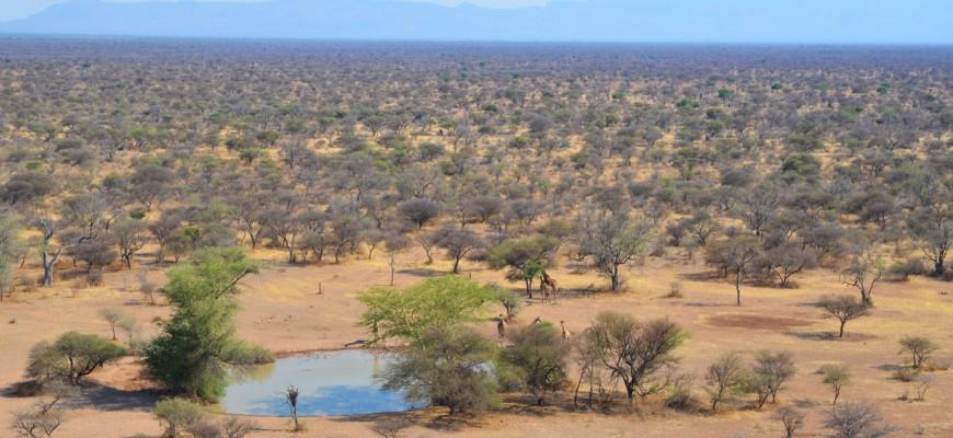 Die Weiten der Savanne (mit Giraffen am Wasserloch)