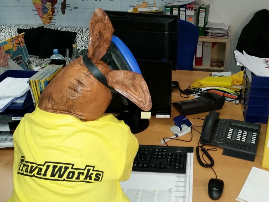 Büro Känguru vor dem Schreibtisch