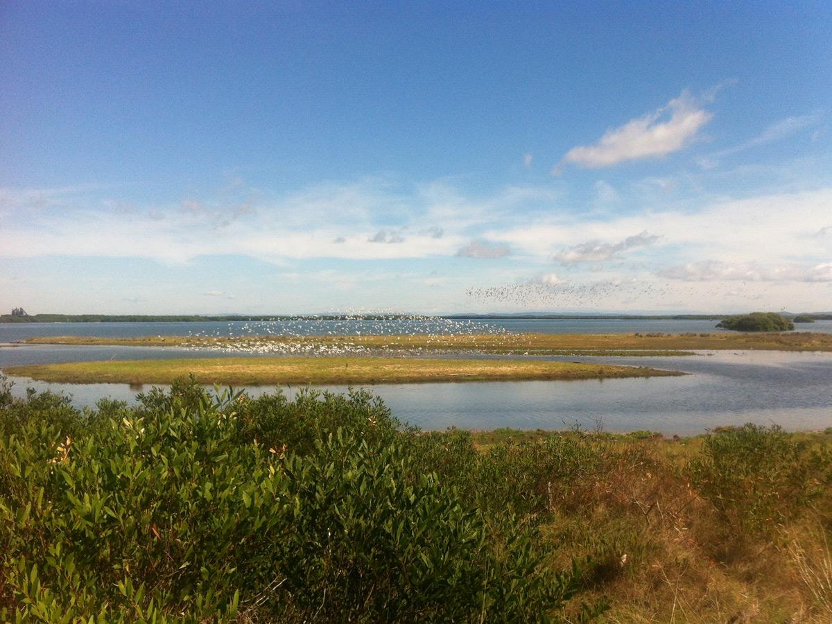 Die Kooragang Wetlands mit dem Vogelreservat
