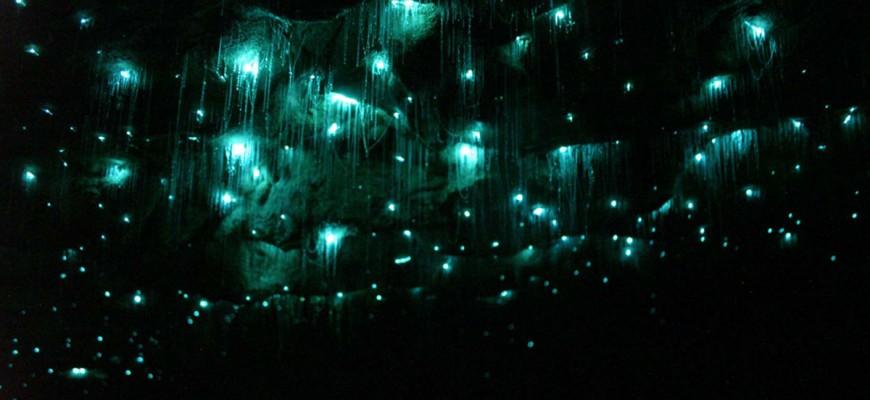Erstaunliches Phänomen in der Natur: die leuchtenden Glowworms