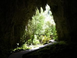 Raus aus der Höhle, rein in den Urwald