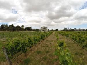 Fast wie in Frankreich: Martinboroughs Weingüter