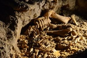 Knochen-Überreste eines Moa-Vogels in einer der Höhlen