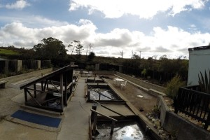 Die blubbernden, stinkenden und heißen Ngawha Springs