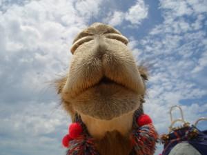 oz_TW86175_-(9)kamel-von-unten