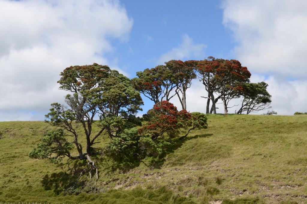 Farbenfrohe Hügel und Bäume im Hinterland