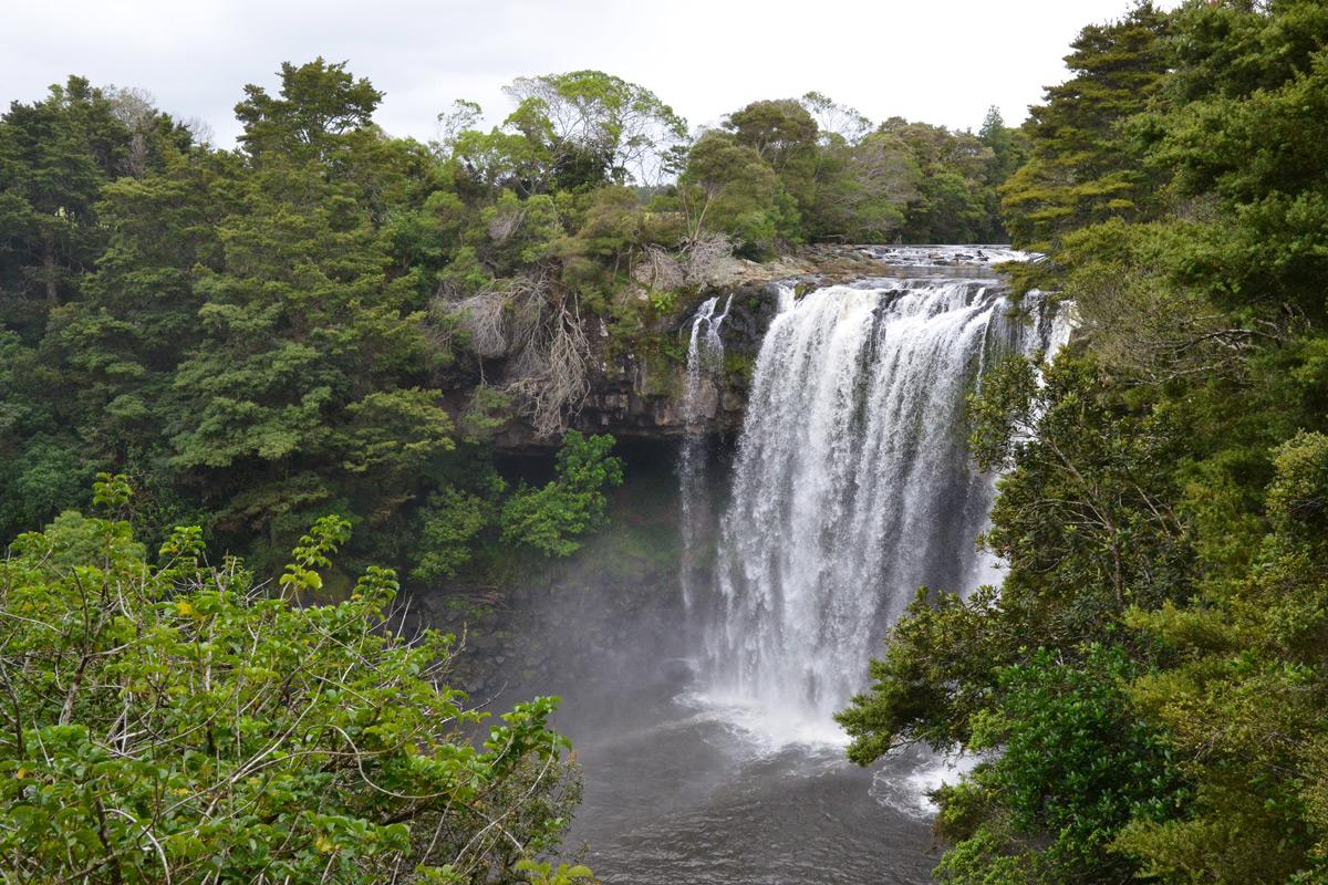 Die Rainbow Falls in Kerikeri