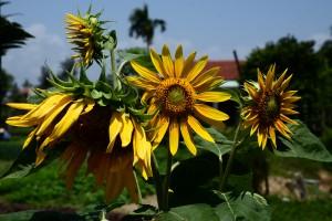 Den Blumen gefällt das heiße Wetter!
