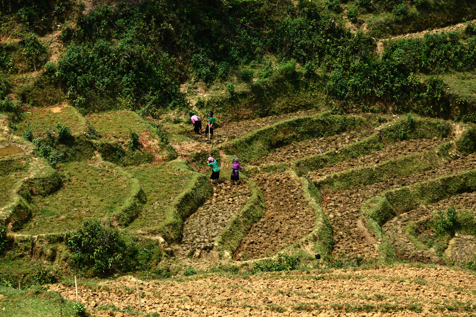 Frauen arbeiten auf den Reisterrassen