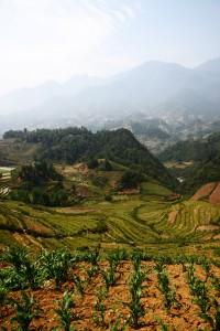 Wunderschöne Aussicht auf die Reisfelder rund um Sa Pa
