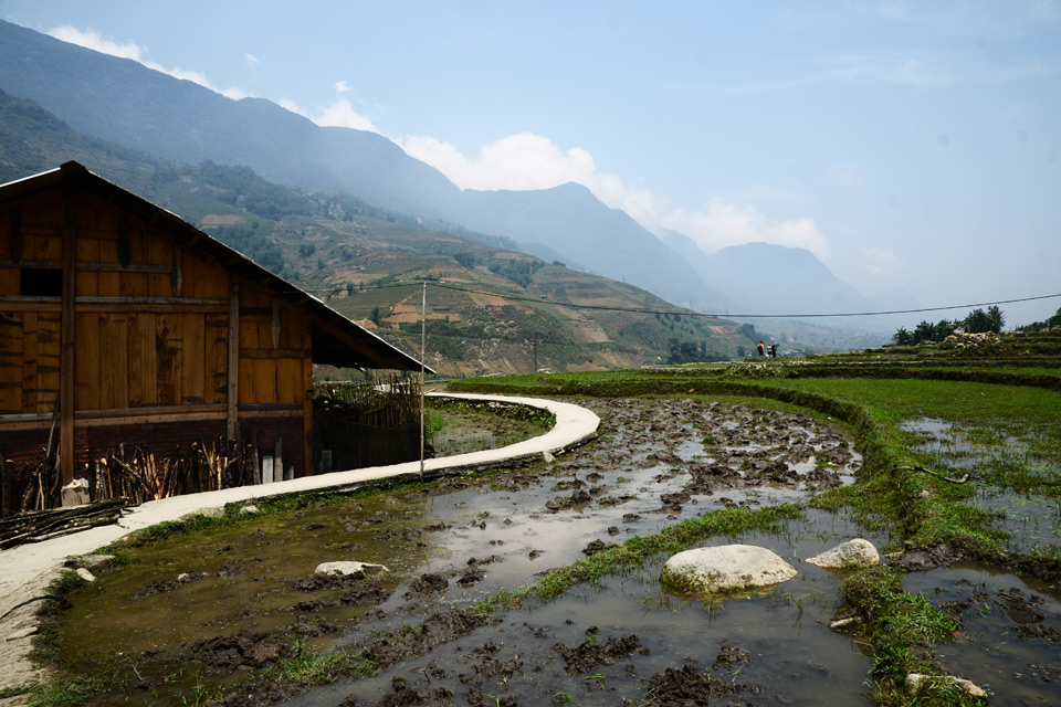Die geschlängelten Wege durch die Reisfelder