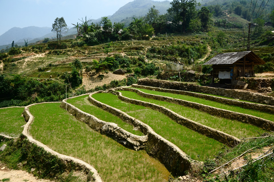 Nur wenige der Terrassen sind im Mai mit Reis bepflanzt