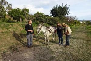 Sandra-Andalusien-Esel-klein