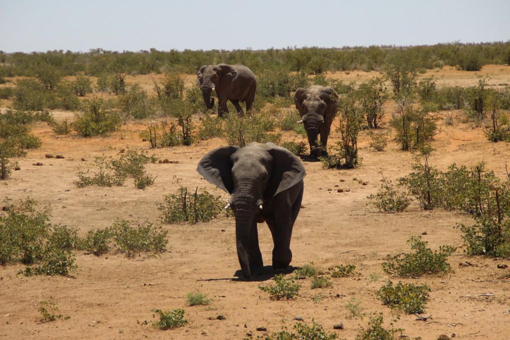 TravelWorks-Namibia-Elefanten
