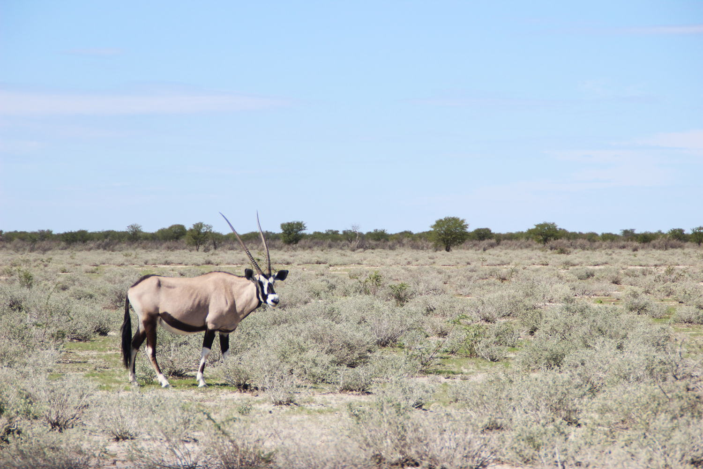 TravelWorks-Namibia-Oryx