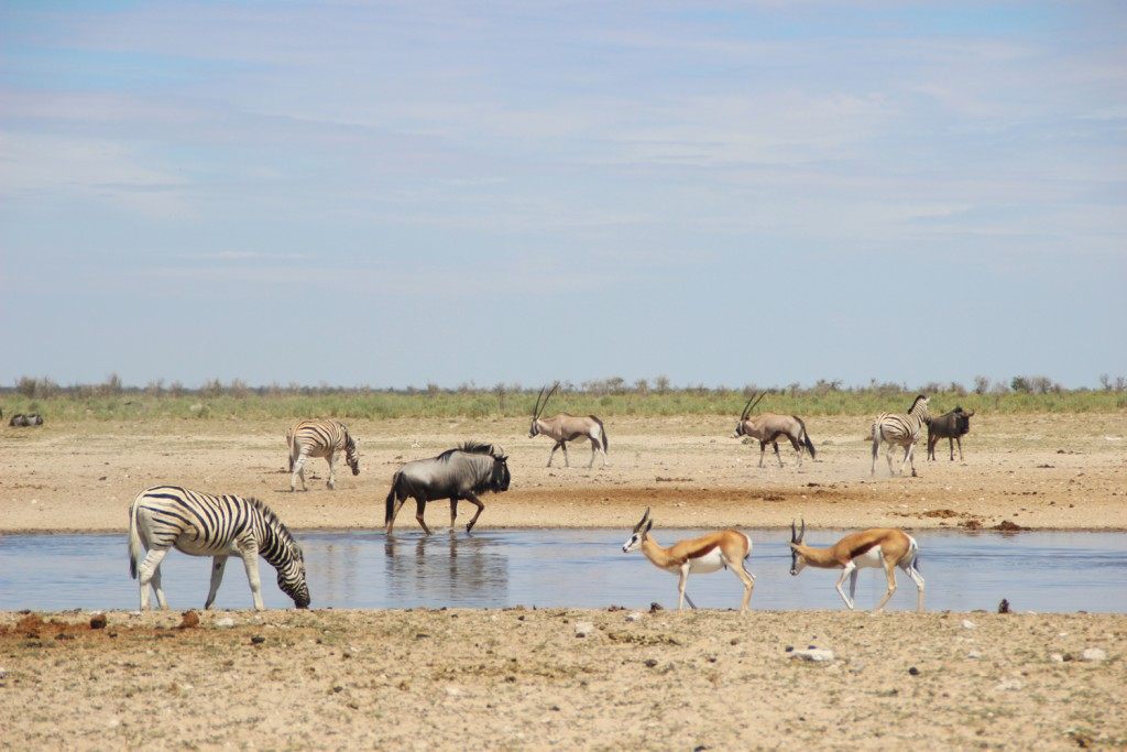 TravelWorks-Namibia-Tiere