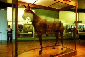 SB_MelbourneMuseum_2012_-(21)