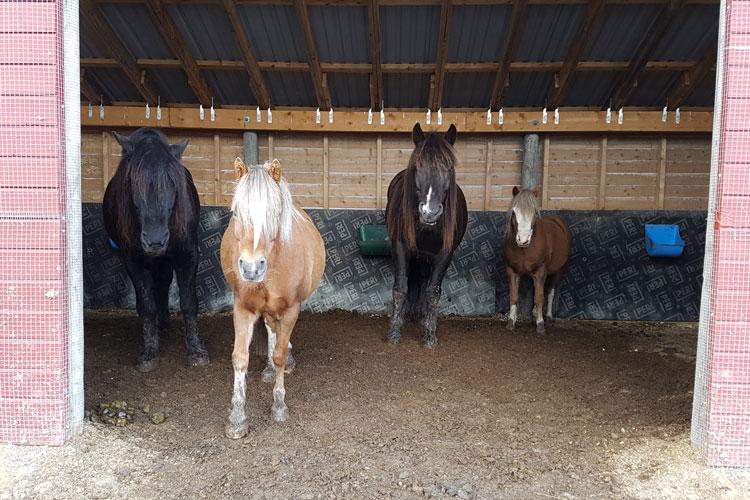 no-tw1637560-Farmarbeit-pferde