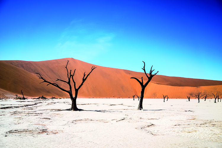na-shutterstock_1006030705-Namibia Sossusvlei and Dead Vlei with dead trees