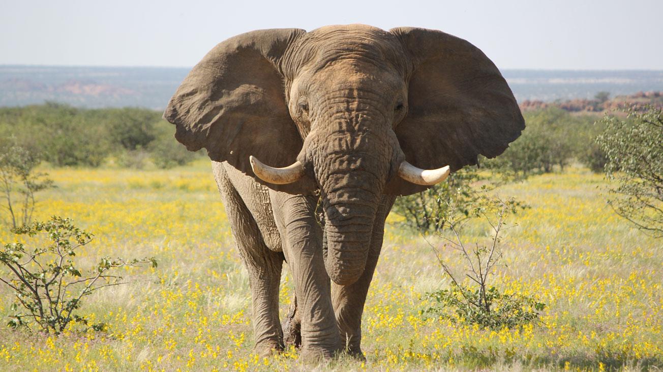 freiwilligenarbeit namibia arbeiten mit elefanten travelworks. Black Bedroom Furniture Sets. Home Design Ideas